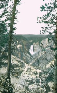 Mountain ravine- large water fall, evergreen trees