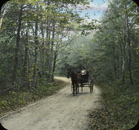 Woman in horse drawn buggy on tree lined country road
