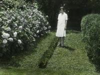 Arbor vitae- Hydrangea arborescens (women, hedges)