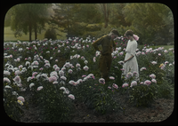 Young man and woman observing flower in a large peony garden