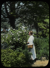 Woman with basket near flowering shrubs