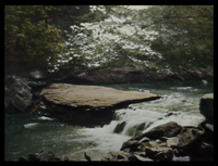 Indiana State Park (cascading brook, flat rock, dogwood branch)