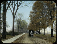 Horse drawn wagon on tree lined road