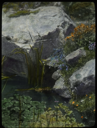 Falmouth (rocks, water- plants in water and rock crevices