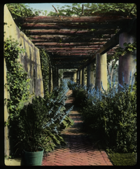Rogers Estate. Southampton, L.I. Olmstead Brothers Landscape Architecture (Stucco columns and wall lining a brick path, log pergola tops, vines, blue flowers)