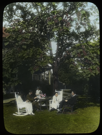 People sitting on rocking chairs in garden under Catalpa tree