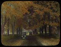 Automobiles on maple lined road in autumn