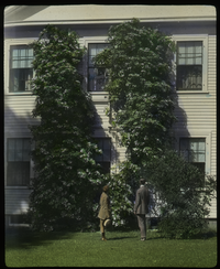C R Elders (wooden house with large climbing flowering vine, hydrangea?, man and women observing)