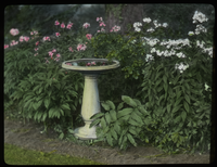 Mrs. Bishops Garden (bird bath, solomon's seal, white and pink phlox)