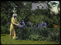 Mrs. Park- Amherst (elderly woman in garden tending iris kaempferi)