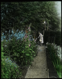 Waugh Garden (iris, delphinium, hollyhocks and others, woman with basket examining)