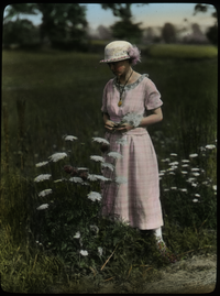 Woman in filed admiring Daucus carota