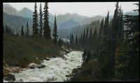 Rushing stream surrounded in grasses and coniferous trees, mountains in background