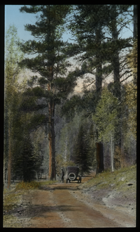 Kaibab Forest, Arizona (auto on road through forest)