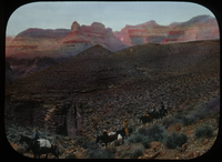 Leaving for Tonto Trail (people on mules in grand canyon)
