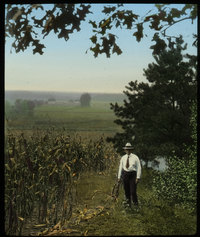 Country Road Trees (man standing by cornfield)