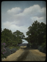 Auto on dirt road, bordered by trees and shrubs