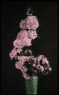 Ikebana by Yukiko Kyojima (Mountain Laurel in a vase)