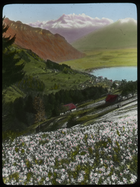 Poet narcissus - Switzerland (flower covered hill looking down into valley with town and lake, mountains in background)