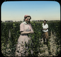 Spaeth Nursery, Berlin (two woman working in field with plants)