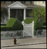 Sheared Privet Hedge (sheared privet hedge with picket fence and house)