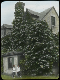 Hydrangea petiolaris, Amherst (Hydrangea petiolaris on Amherst house by two girls)