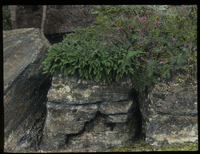 Natural Rock Garden (rock garden with flowers on top)