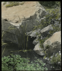 Rock Garden by Joe Whitney, Falmouth (small pond with lilies by rocks)
