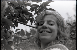 Julie Howard picking apples (Warwick, Mass.), linking to the digital object