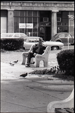 Elderly man seated on park bench near Springfield City Hall (Springfield, Mass.), linking to the digital object