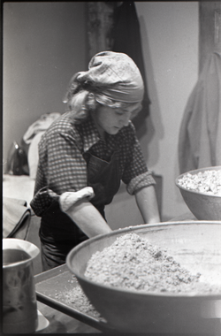Unidentified member working in commune-owned kitchen (possibly Zapmia Pizza) (New York, N.Y.), linking to the digital object