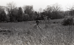 Young woman seated in tall grass (Warwick, Mass.), linking to the digital object