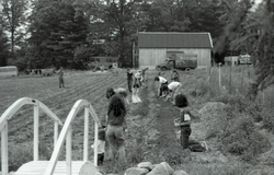 Hoeing and planting in the Brotherhood of the Spirit commune garden (Warwick, Mass.), linking to the digital object