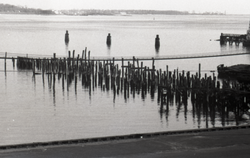 Wood pilings in the water , linking to the digital object