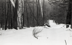 Snow-covered path in the Warwick woods (Warwick, Mass.), linking to the digital object