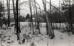 Birch stand in the snow, Warwick woods, with Brotherhood of the Spirit commune house in background (Warwick, Mass.), linking to the digital object