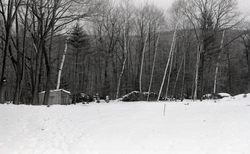 Snowy woods with shed and woodpile (Warwick, Mass.), linking to the digital object
