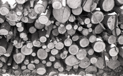 Close-up of woodpile (Warwick, Mass.), linking to the digital object
