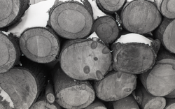 Close-up of sawn ends of logs in a woodpile (Warwick, Mass.), linking to the digital object
