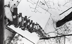 View down precarious ladder into treehouse (Warwick, Mass.), linking to the digital object