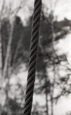 Rope, hanging from a tree in snow-covered woods (Warwick, Mass.), linking to the digital object