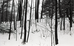 Snow-covered woods (Warwick, Mass.), linking to the digital object