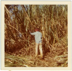 Eva Mondon cutting cane