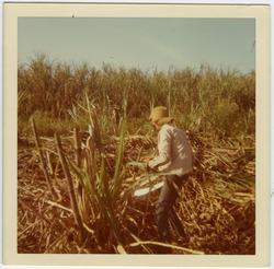 Jamie Lasalle cutting cane