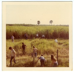 Brigade members in cane field