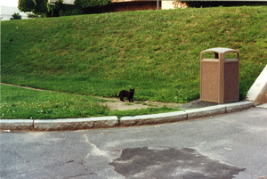 Blackie below the ridge at Whitmore Administration Building