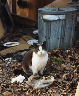 Ashes waits for dinner in front of the quonset hut
