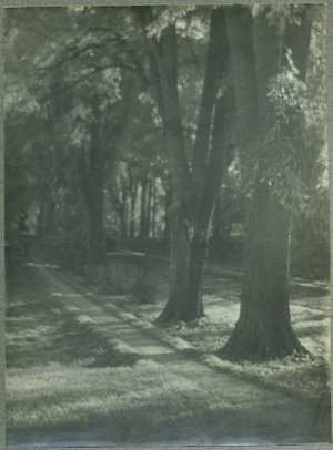 Tree-lined lane, linking to the digital object