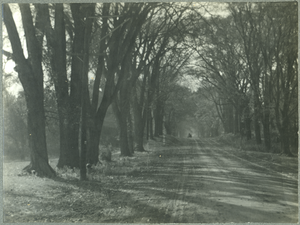 Tree-lined lane, with carriage in background, linking to the digital object