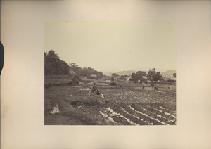 Farmers in agricultural field, linking to the digital object